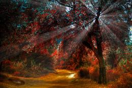 red hdr sunlight sunbeam autumn fall seasons wallpaper background 1105