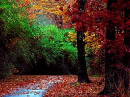 wallpapers catalog middot yellow red autumn forest HD Wallpapers 808