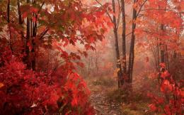Red autumn forest wallpaper #41017 868