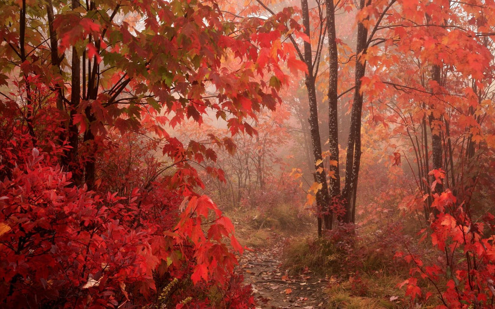 red fall wallpaper - photo #22