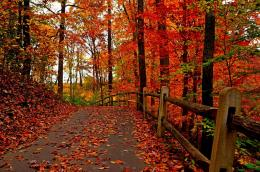 Nature trees colorful road autumn path forest leaves park wallpaper 1794