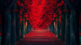 Red Trees Pathway HD Wallpaper » FullHDWppFull HD Wallpapers 801