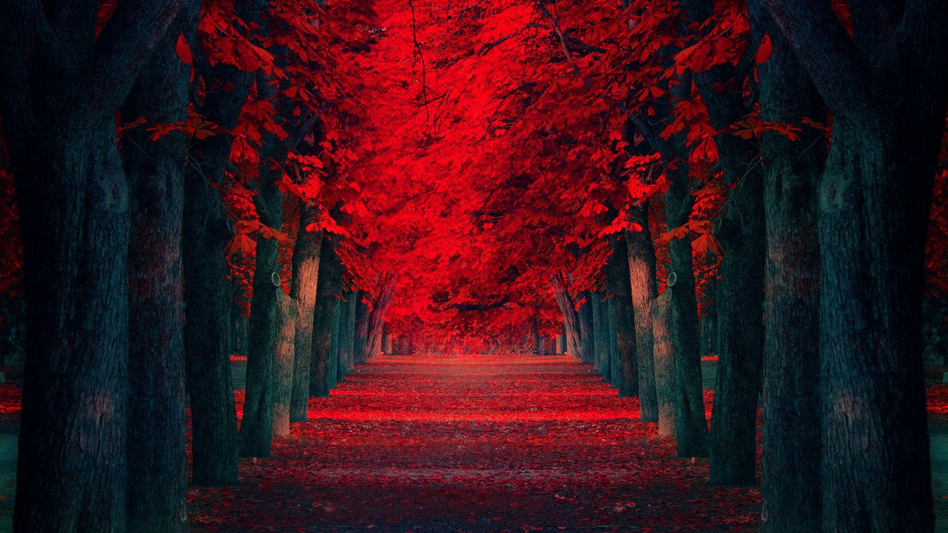 nature Landscape Fall Red Yellow Leaves Path Trees Fairy