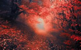 forest path trail leaves red autumn fall color wallpaper background 506