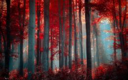 forest woods leaves fall autumn sunlight light filtered wallpaper 515