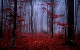 forest fog autumn trees branches leaves maroon red nature wallpaper 650