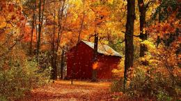 Download Red barn in autumn forest wallpaper 928