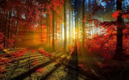 Autumn Red Forest Wallpapers | HD Wallpapers 824