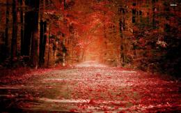 Share your wallpaper 8302 red autumn 1920x1200 nature wallpaper jpg 1288