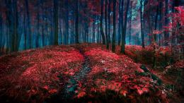 nature trees forest autumn fall seasons red contrast leaves wallpaper 1561