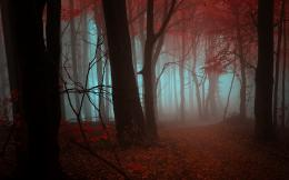 trees forests leaves autumn fall seasons fog mist color red wallpaper 453
