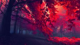 forest autumn trees fog red dark beautiful amazing wallpaper 1231