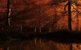 Dark Autumn Forest Wallpaper Dark autumn fo 1474