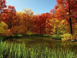 Pond in autumn and red leaves forest wallpaper in Nature wallpapers 316
