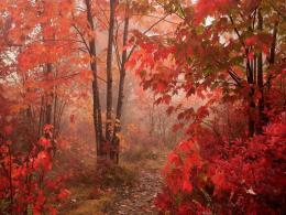 fall Nature Forest Red Autumn forest 011599 950