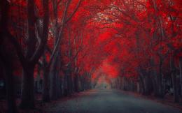 Red autumn street wallpapers and imageswallpapers, pictures, photos 856
