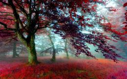 Red Effect Autumn Forest HD WallpapersHigh Definition Wallpapers 320