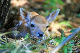 BAMBI 3 by MsButterfly82 on DeviantArt 1901