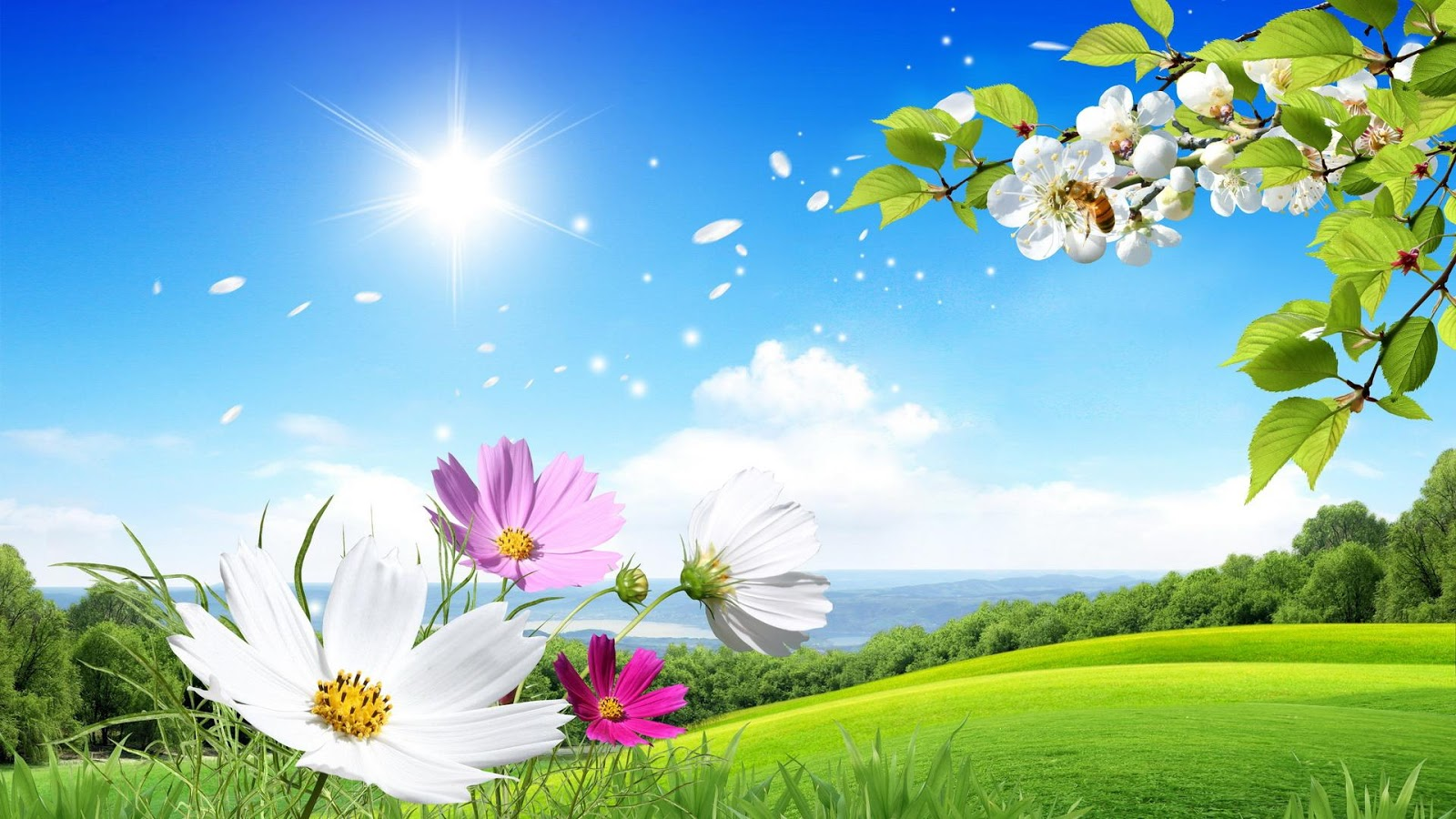 flowers for flower lovers : Flowers wallpapers natural sceneries 750