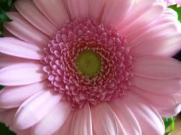 Pink Flower Desktop Wallpapers, wallpaper, Pink Flower Desktop 1207