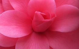 Pink Flower Closeup 1794