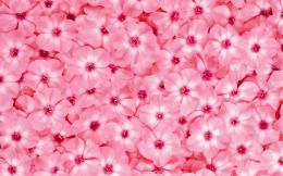Close up Flowers Wallpaper 1920x1200 Closeup, Flowers, Pink 848