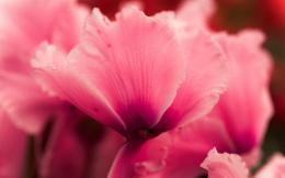 Pink Flower Wallpaper Pictures 18 | Pink Flower Wallpaper Image 1648
