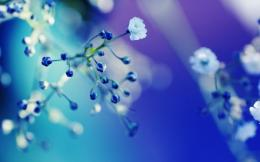 Blue Flowers Close Up WallpapersDesktop Wallpaper 570