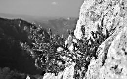 Black And White Cliff Hd Wallpaper | Wallpaper List 1175