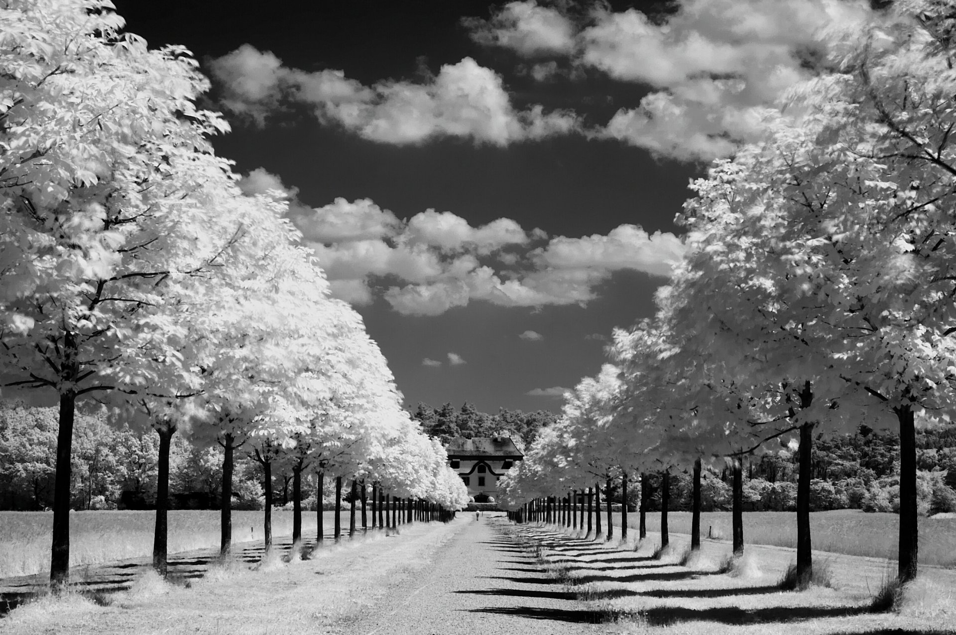 50 HD and QHD beautiful black and white wallpapers 398