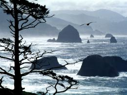 Oregon Coast – 1600×1200 – ID 36769 | Nature Desktop Wallpapers 459