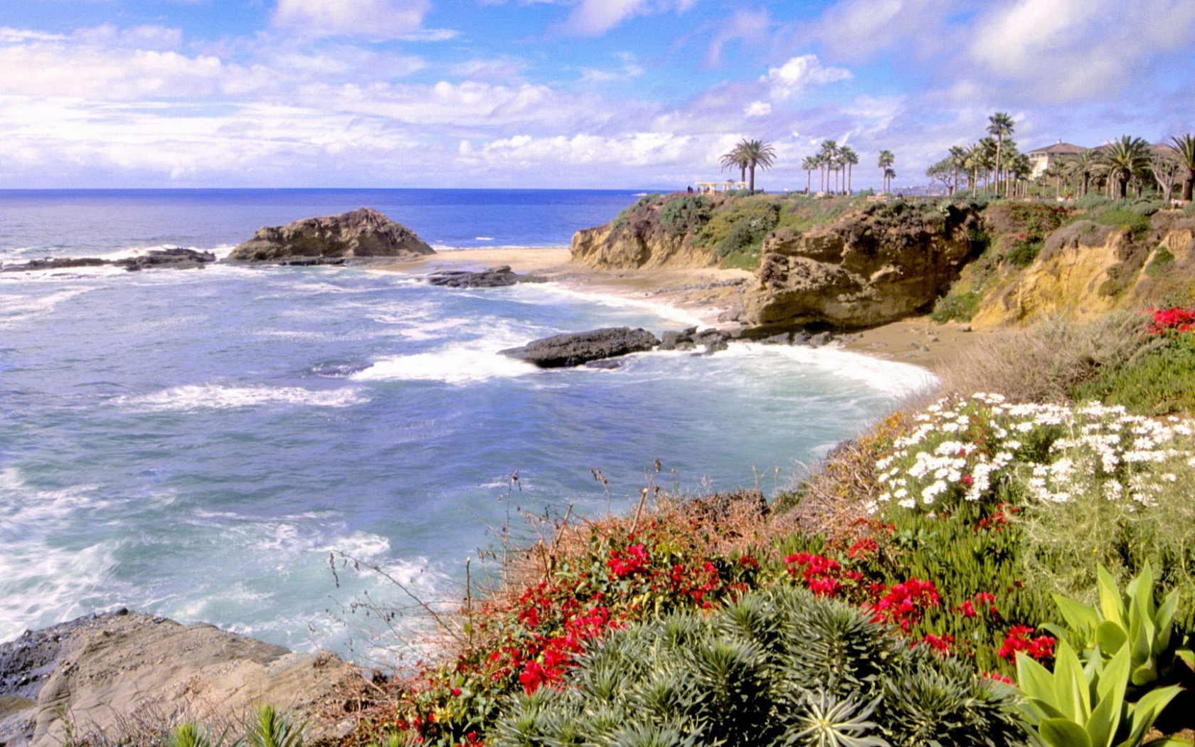 Download Wallpaper 1680x1050 coast, sea, flowers, multi colored, waves 582