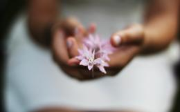 Hand Girl Mood HD wallpaper 1680x1050 Macro Flowers Pink Hand Girl 895