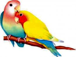 WALLPAPERS WORLD : Birds wallpapers 1193