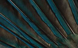 Feather colorful wallpaper WallpapersHD Wallpapers 85550 1952