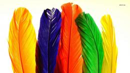 Colorful feathers wallpaperArtistic wallpapers#7219 1330
