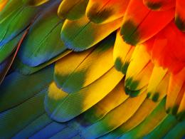 Displaying 16Images ForColorful Feathers Wallpaper 969