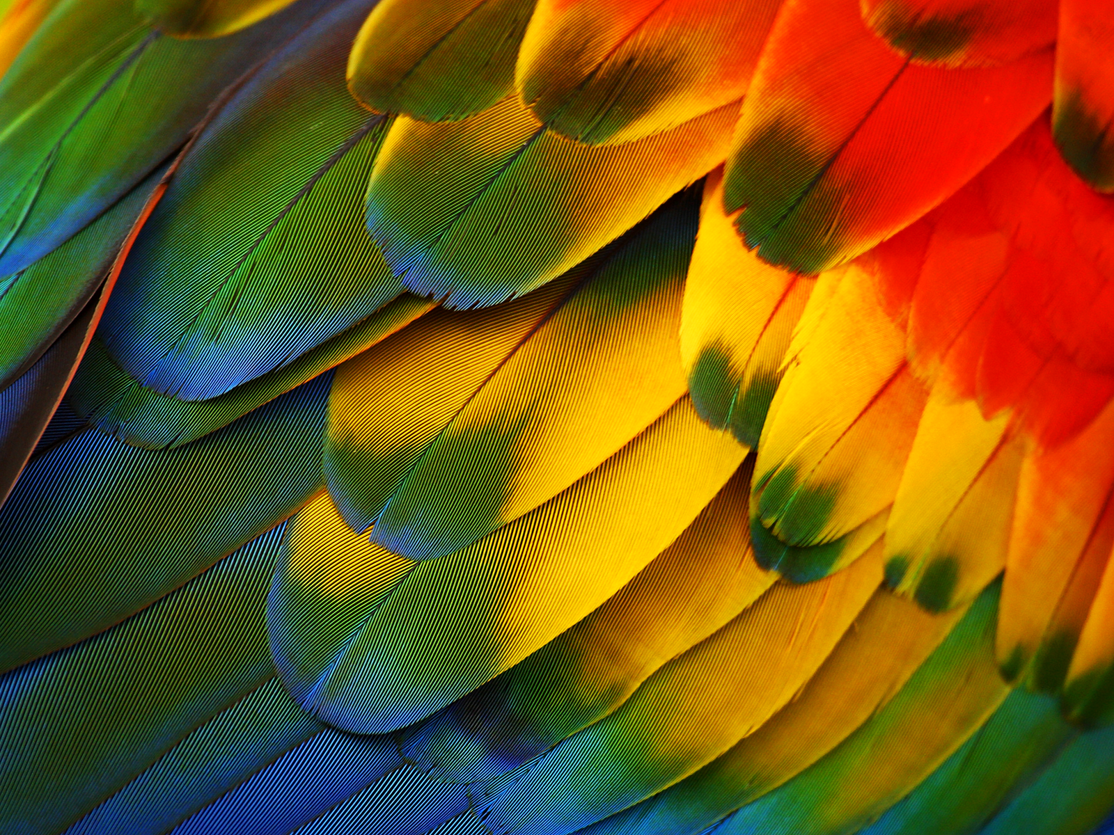 awesome colored feathers wallpaper - photo #46