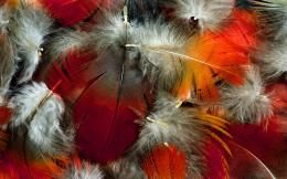 colorful feather wallpaper 1920x1200 jpg 1924