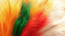 Colorful Feathers HD Desktop Wallpaper Background download 1811