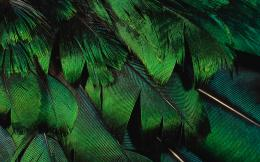 Colorful Feathers and Wing Wallpapers36 обоев 534