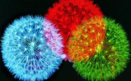 Feather fireworks colorful abstract 3d and HD Wallpaper 1189