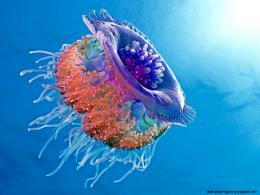 Most Colorful Jellyfish | Wallpapers Gallery 586