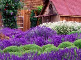Lavender Cottage Hd Wallpaper | Wallpaper List 591
