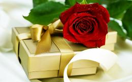 Surprise Package with Red Rose Wallpapers Pictures Photos Images 1395