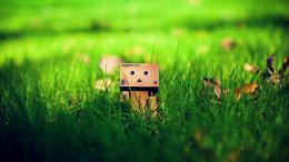 On The Grass Danbo Bokeh Wallpaper Wallpaper | WallpaperLepi 1821