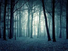 Hd Wallpapers Dark Forest Desktop Backgrounds 2560 X 1600 1084 Kb Jpeg 741