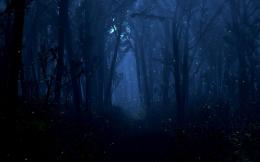 woods in the twilight dark tones landscape wallpaper the twilight 1238