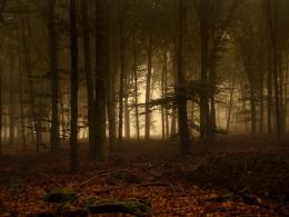 the Twilight Forest Wallpapers, Twilight Forest Desktop Wallpapers 1696