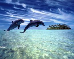 com pictures 1280x1024 2008 Animals Under water Dolphins 004699jpg 729